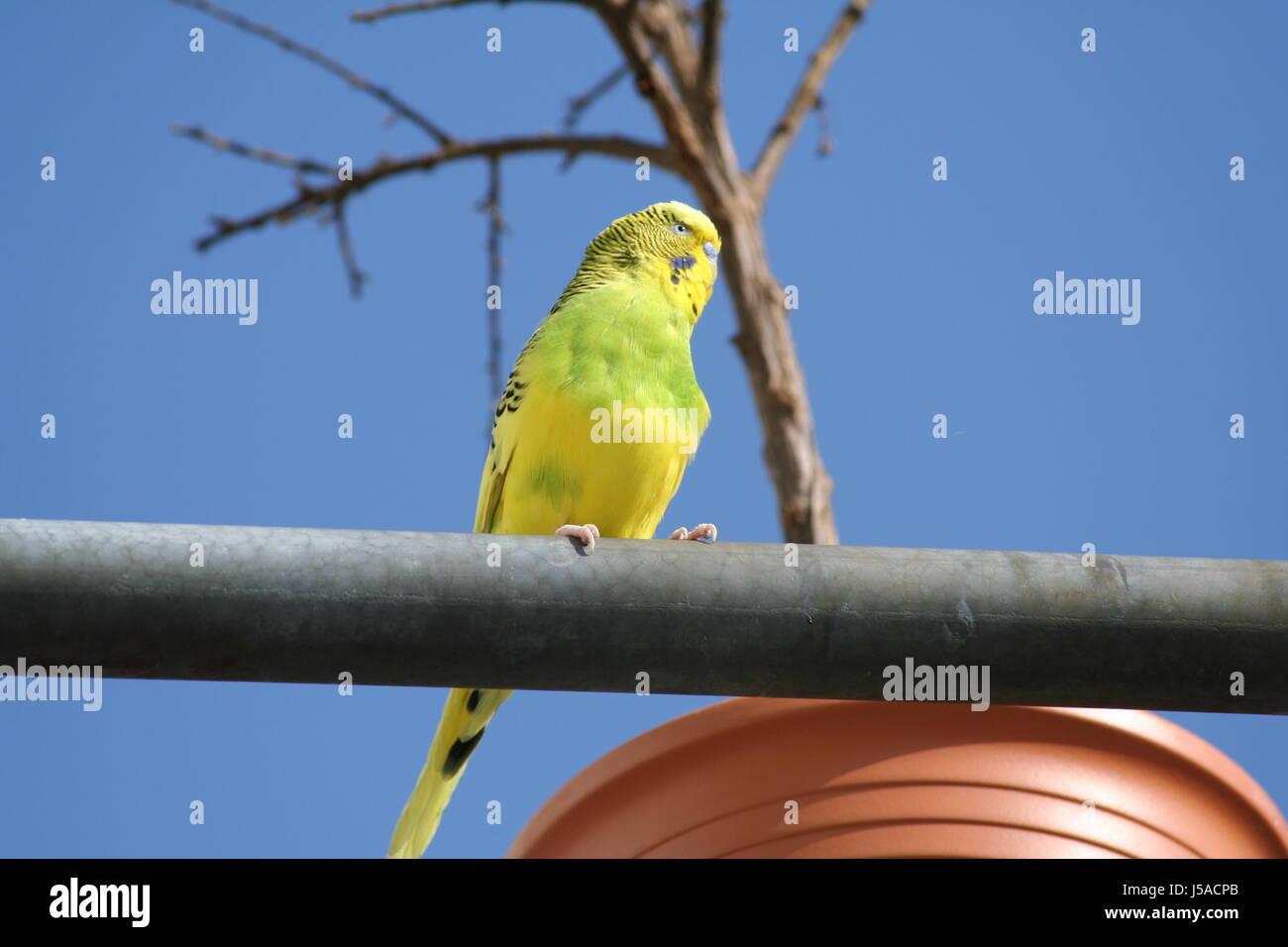 Nett Regenschirm Vogel Färbung Seite Zeitgenössisch - Framing ...