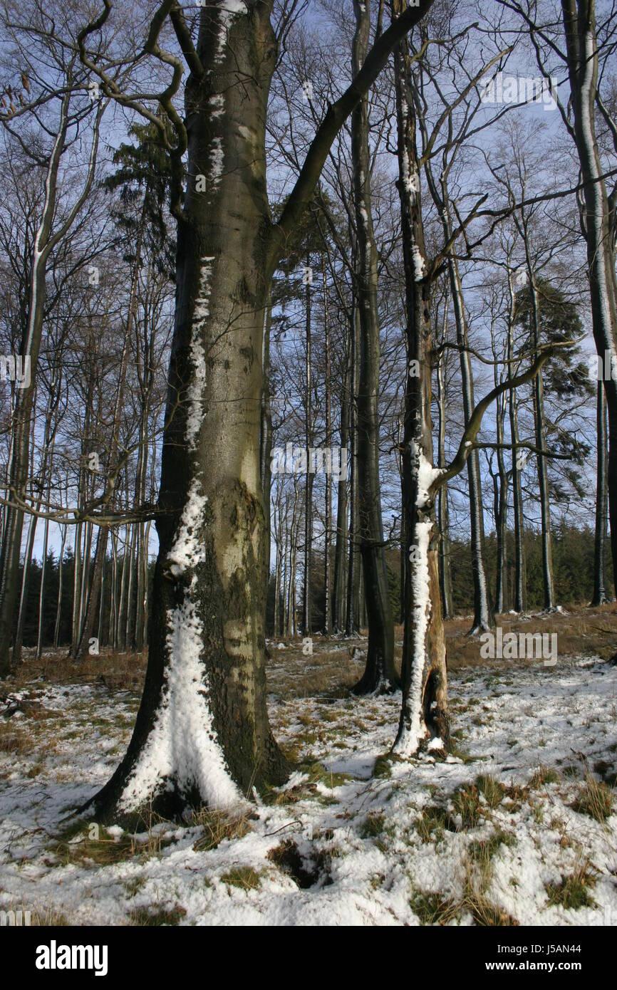 Buch Winter Laubbäume Decke aus Schnee Schnee Wald winterwald Stockbild