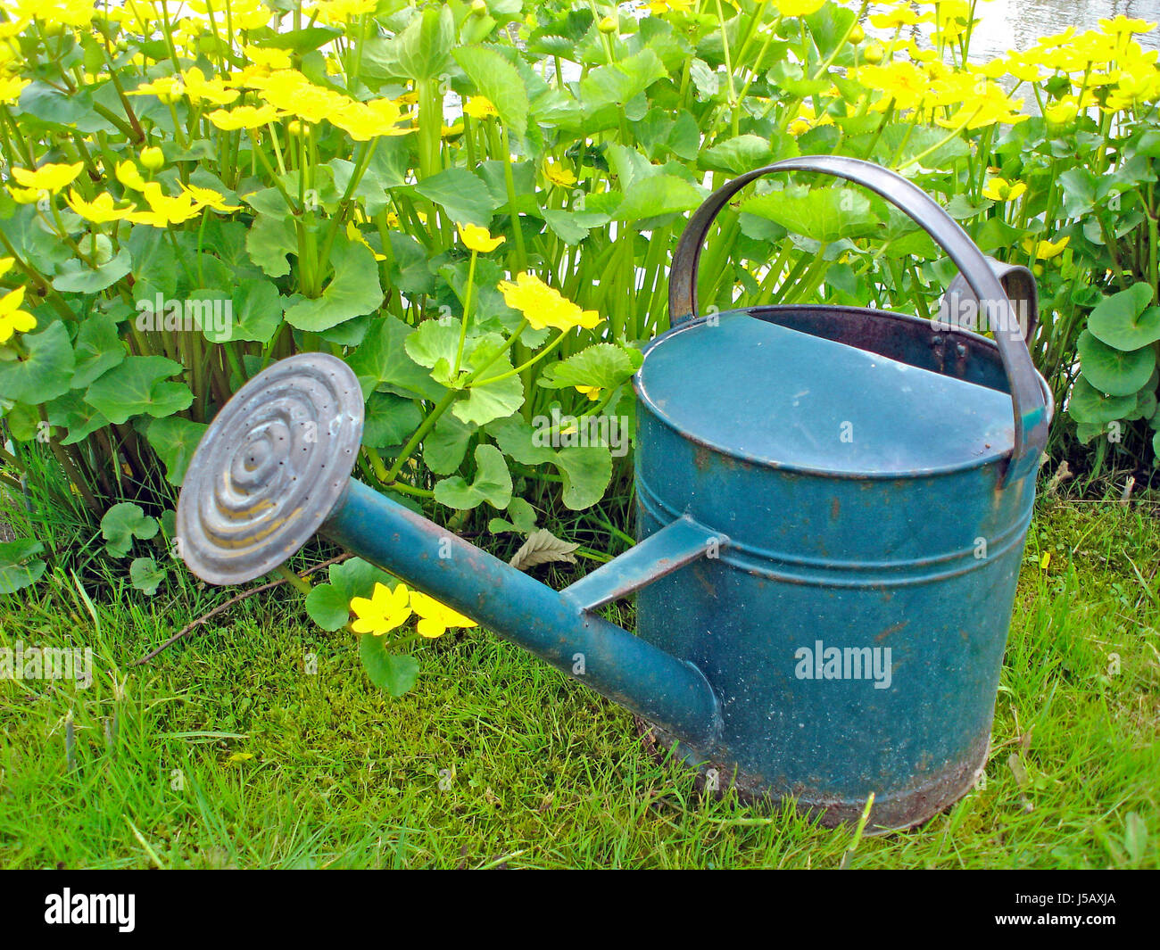 Blau garten gr n metall g rten giesskanne sumpfdotterblumen benzin stockfoto bild - Keramikkugeln blau garten ...