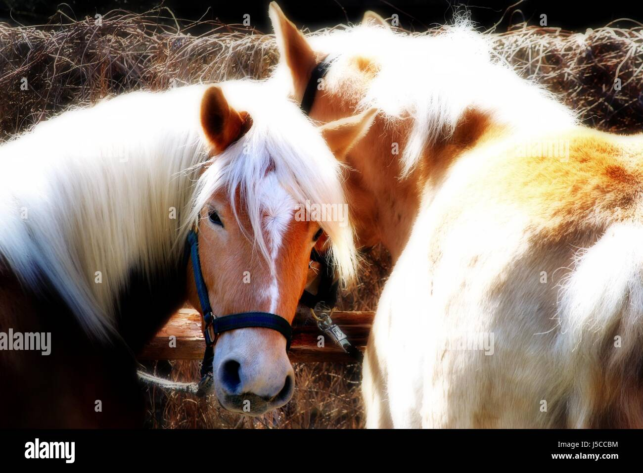 Drawing Horses Stockfotos & Drawing Horses Bilder - Alamy