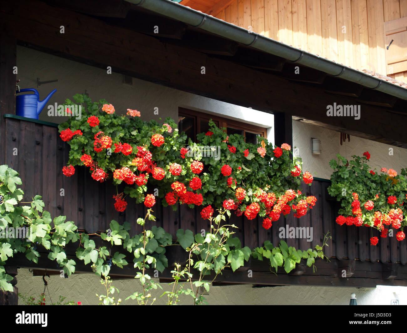 geraniums balcony bayern stockfotos geraniums balcony bayern bilder alamy. Black Bedroom Furniture Sets. Home Design Ideas
