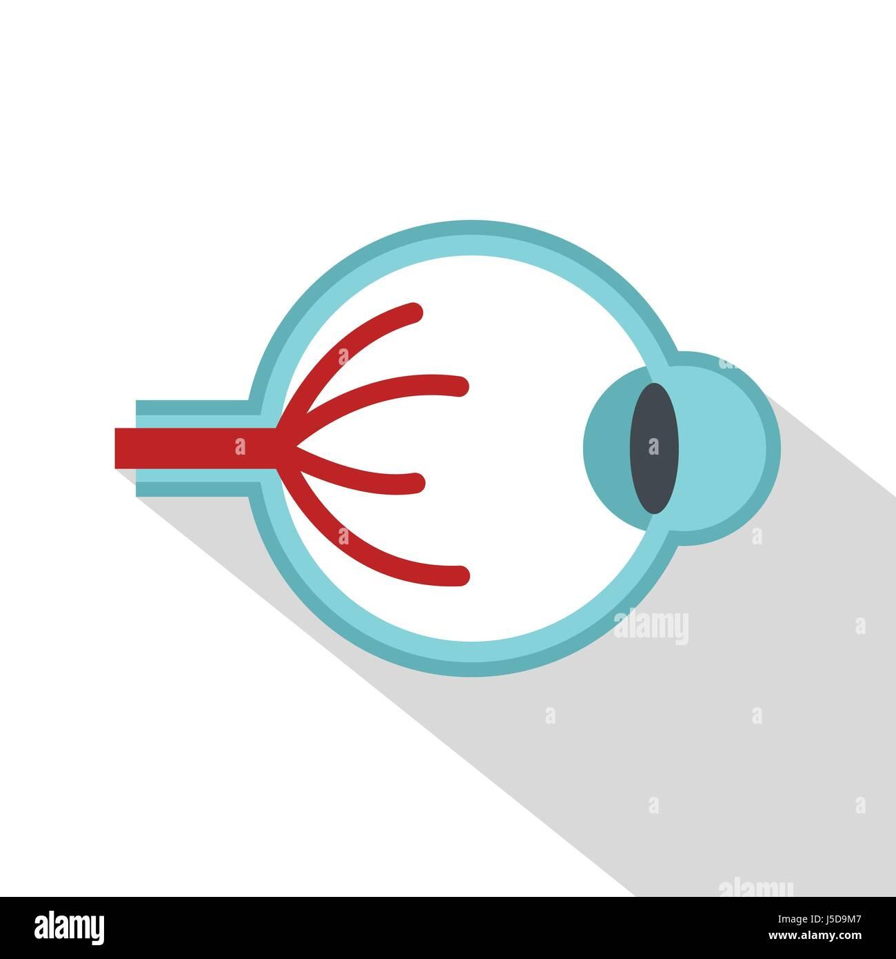 Auge-Anatomie-Symbol. Flache Darstellung der Anatomie Vektor ...