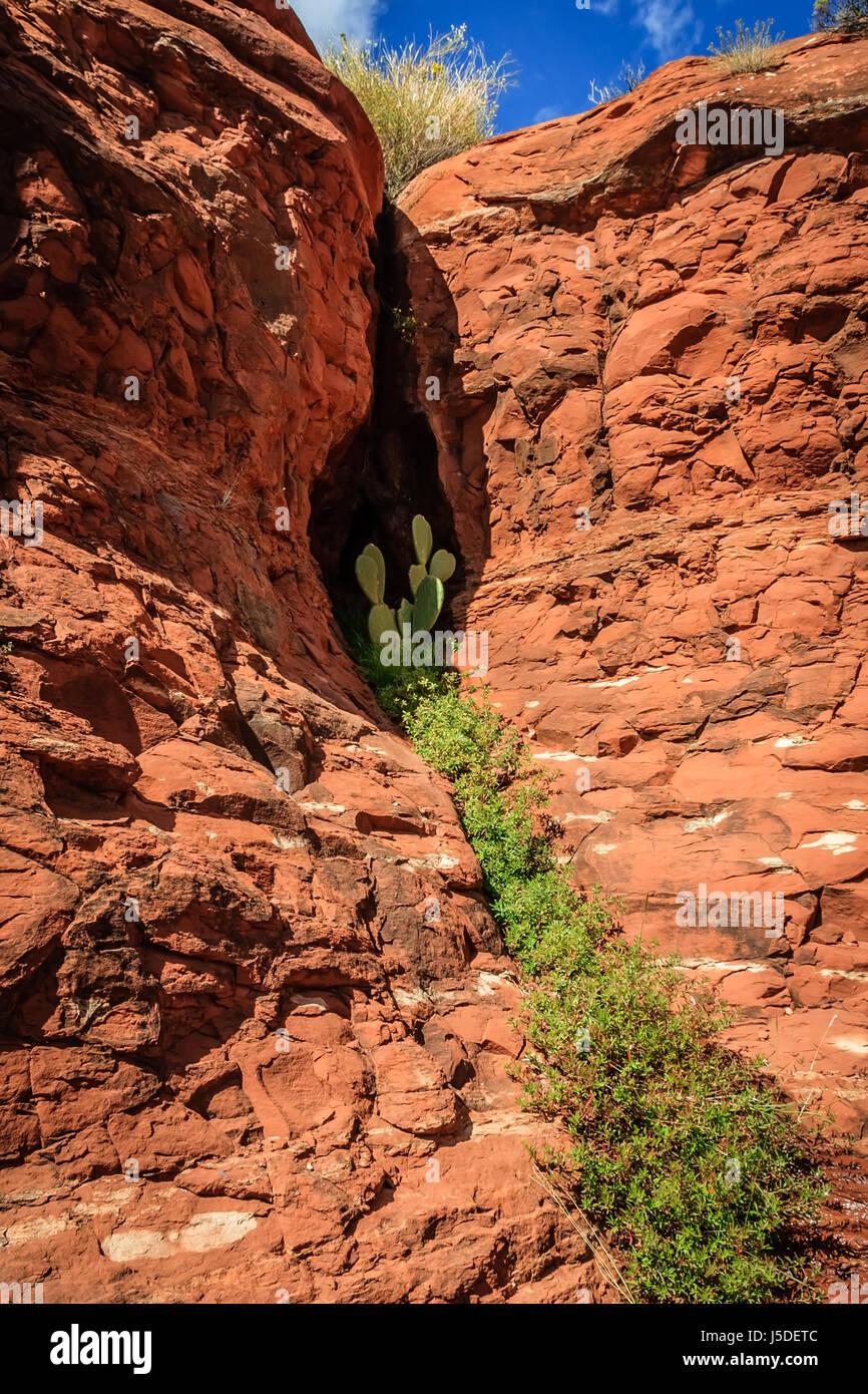 Ein zuverlässiger Tröpfeln von Wasser aus einer Öffnung in die roten Felsen von Sedona schafft eine Stockbild