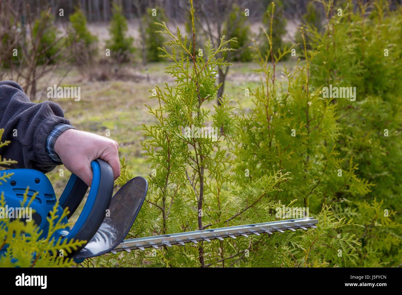 Baum Astschneider Stockfotos Baum Astschneider Bilder Alamy