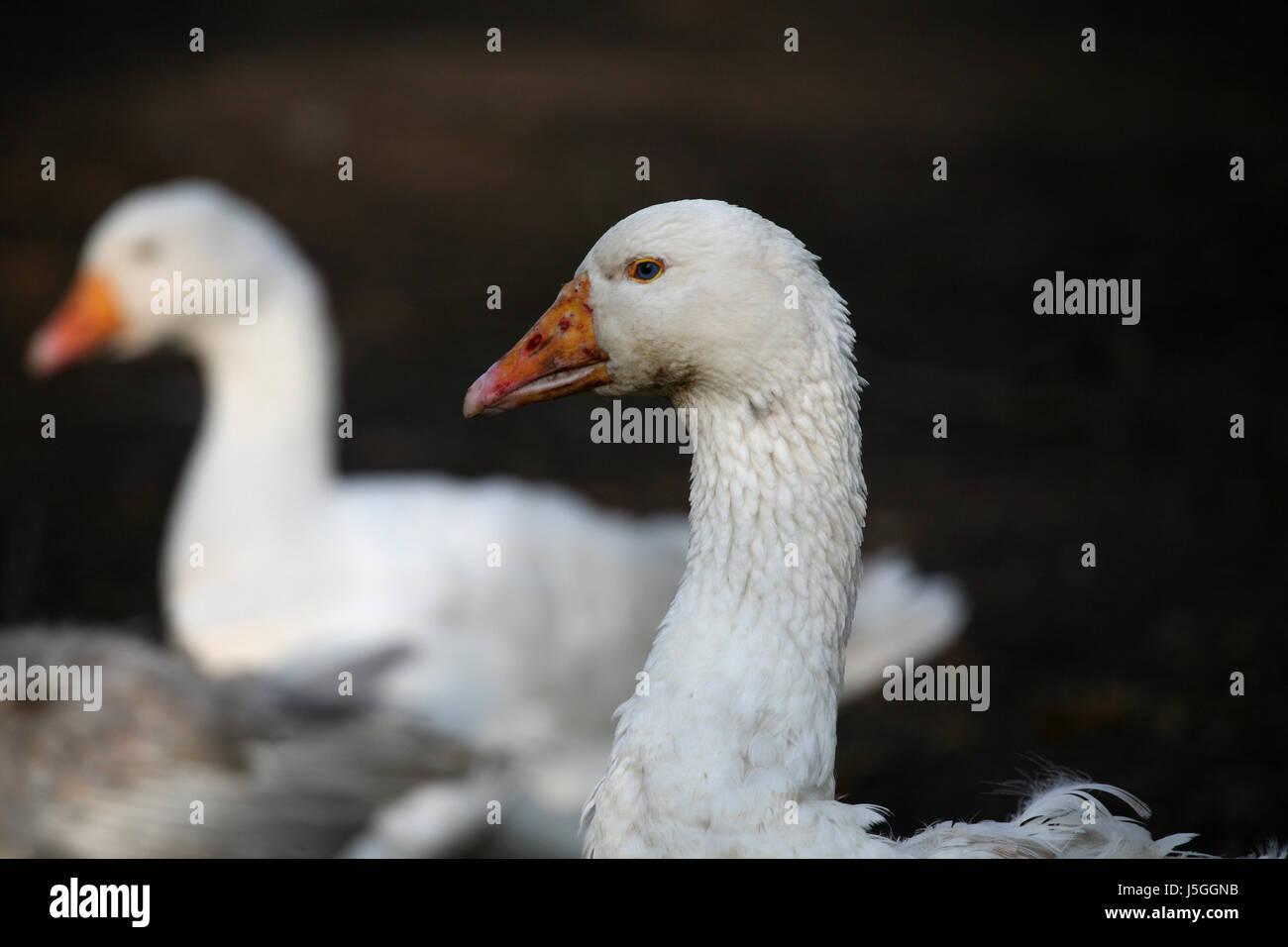 blue Bird\' Stockfotos & \'blue Bird\' Bilder - Seite 24 - Alamy