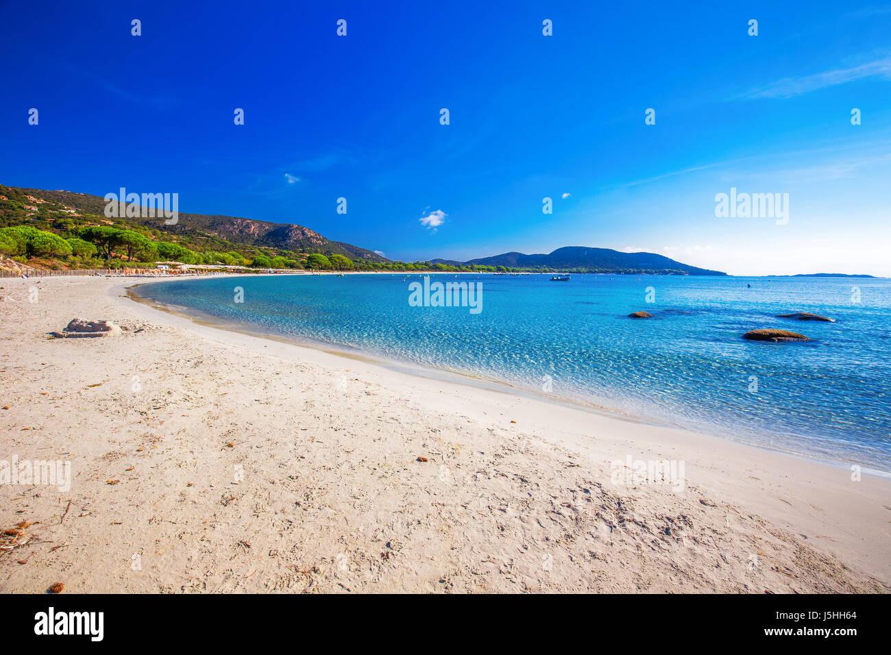 Pinien am Strand von Palombaggia mit Azure klares Wasser und Sandstrand im Süden von Korsika, Frankreich Stockbild