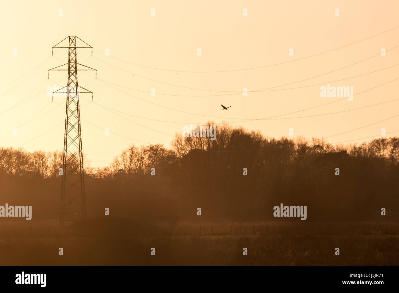 Silhouette von einem Kestrel Falcon Raptor (Falco Tinnunculus) Jagd ...