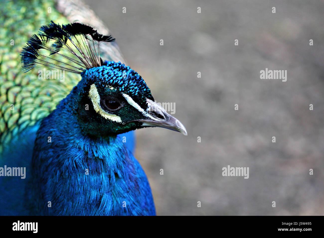 Großartig Blaue Vogel Färbung Seite Galerie ...