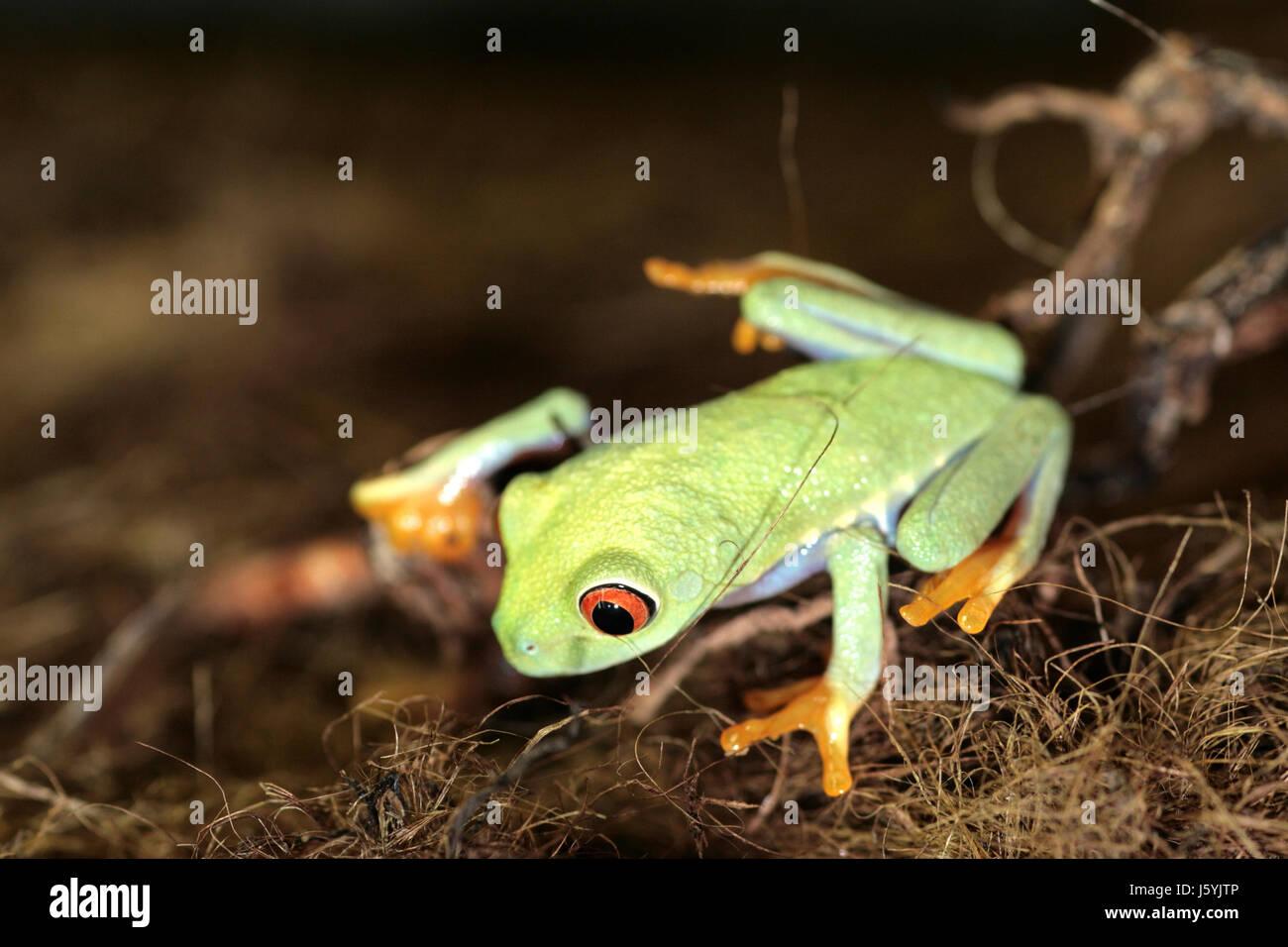 Großartig Frosch Und Kröte Zusammen Malvorlagen Fotos - Entry Level ...