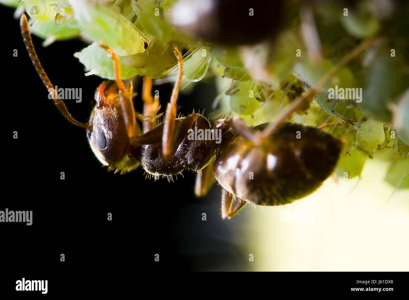 Wunderbar Ameisen Färbung Seite Zeitgenössisch - Beispiel Business ...