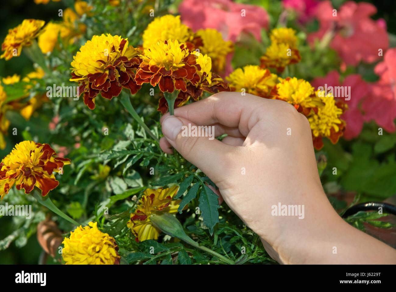 Wahlen Sie Hand Garten Blume Blumen Bluten Pflanzen Balkon Garten