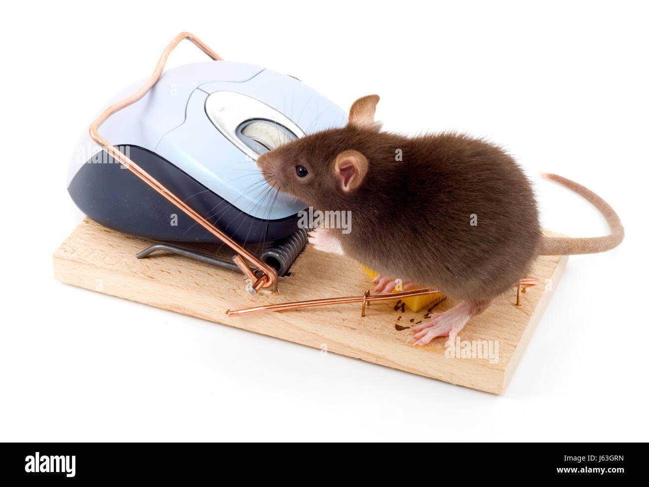 danger mouse stockfotos danger mouse bilder alamy. Black Bedroom Furniture Sets. Home Design Ideas