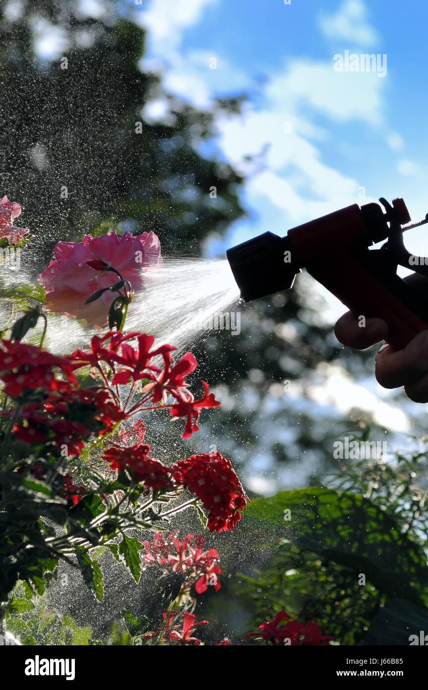Blume Blumen Pflanzen Balkon Gießen Spray Nass Um Wasser Pflanze Blume  Bestreuen