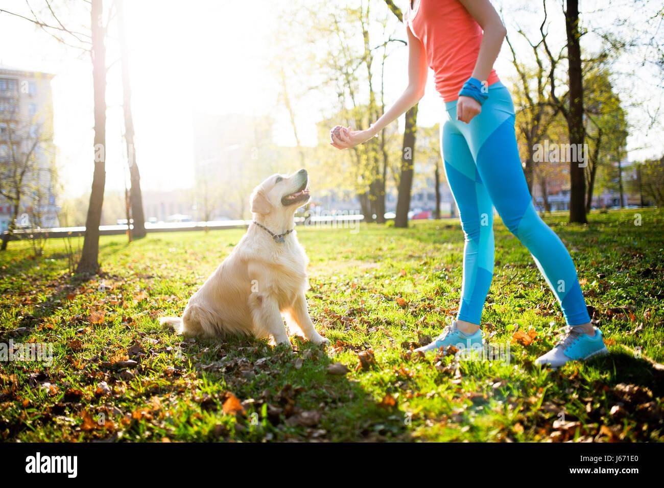 Junge Frau trainiert Labrador Hund Stockbild