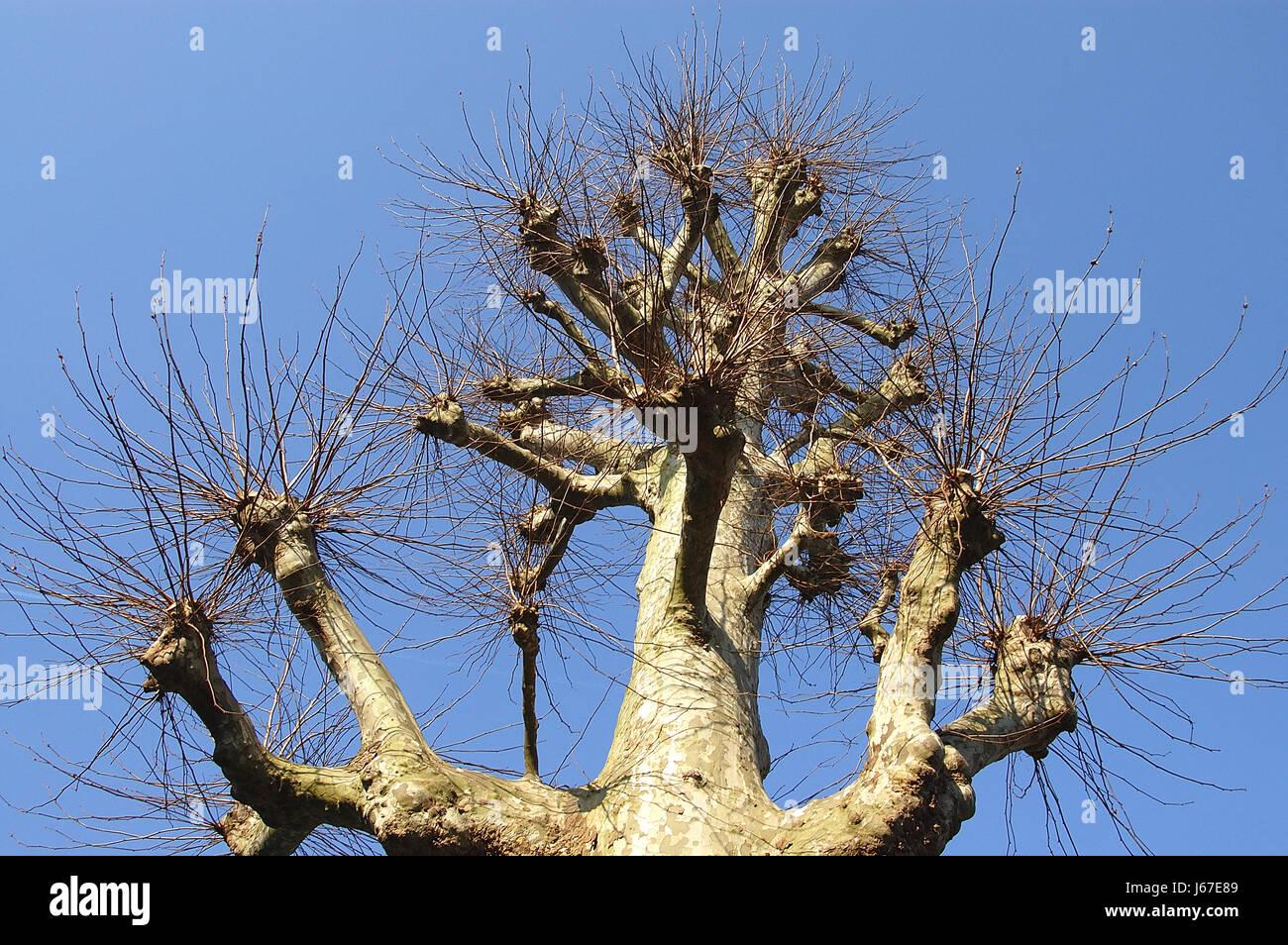 Baum Durchsuchen Schneiden Kopf Aus Einem Baum Baumschlagen Weide