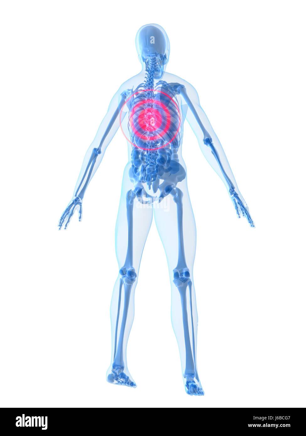 Human Backbone Stockfotos & Human Backbone Bilder - Seite 13 - Alamy