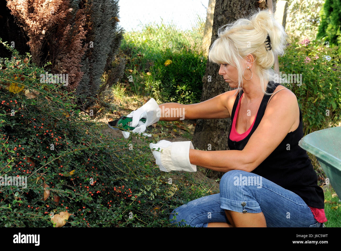 Busche Pflege Busch Im Garten Schneiden Gartenunterhalt Herbst