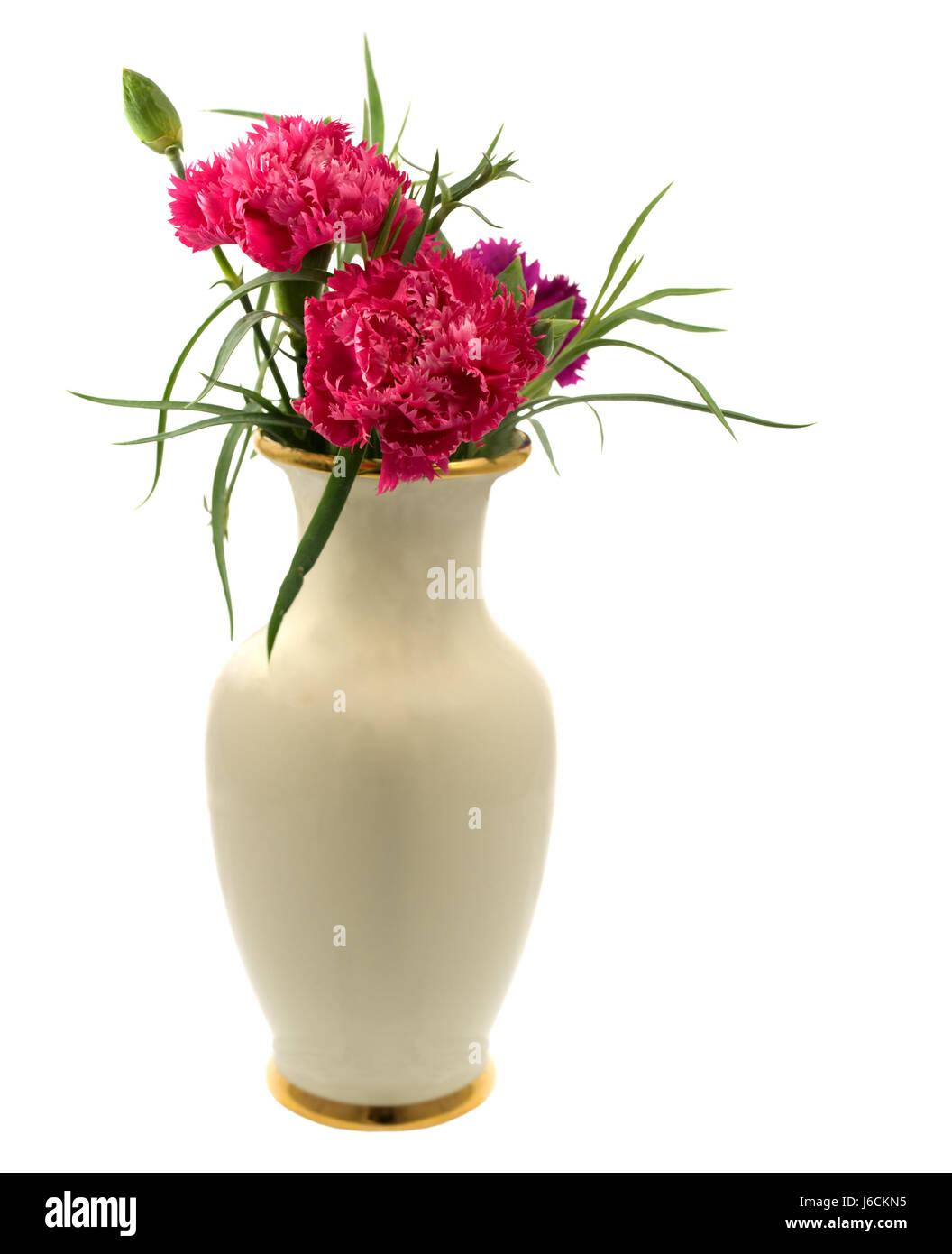 Isolierte Nelke Blume Blumen Pflanzen Isoliert Vase Blume Pflanze