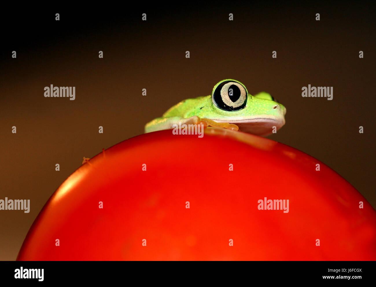 Ungewöhnlich Frosch Zum Färben Fotos - Malvorlagen Von Tieren ...
