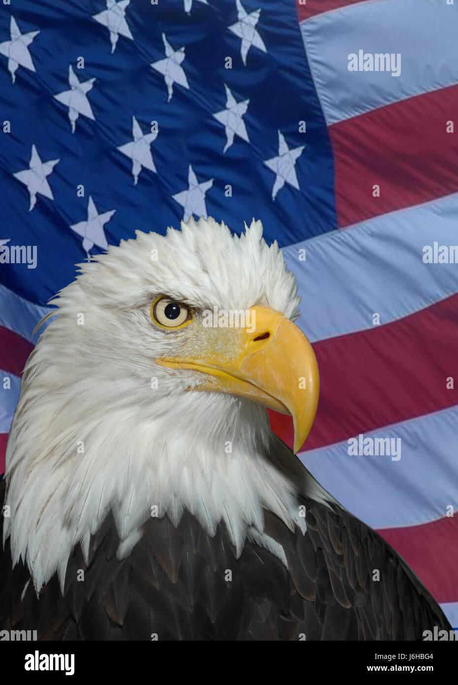 Nett Amerikanische Adler Färbung Seite Fotos - Beispiel ...