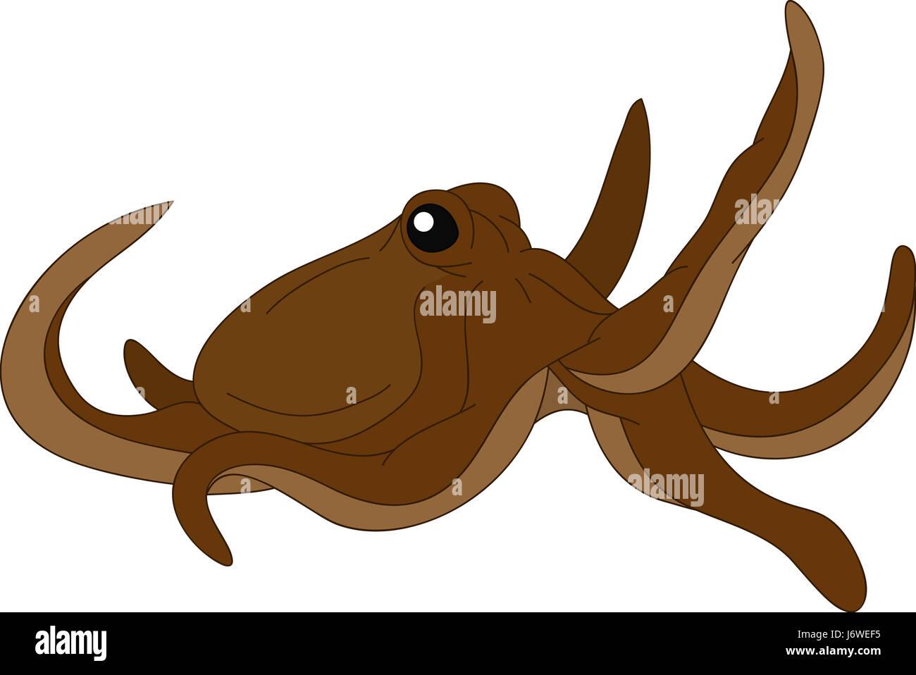 Illustration Draw Octopus Cartoon Art Stockfotos & Illustration Draw ...