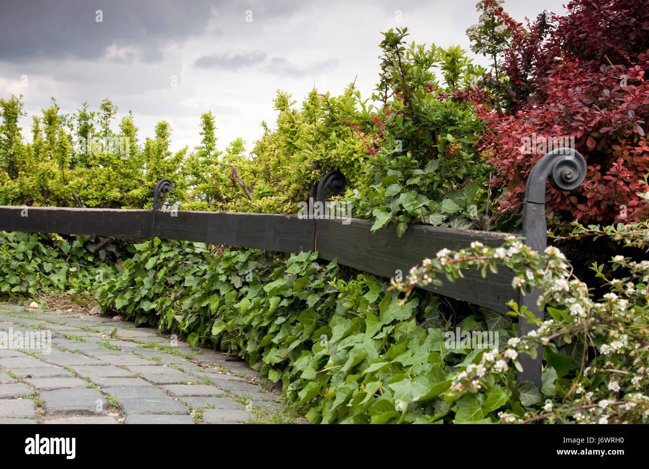 Bush abstrakte Rasen grüner Hintergrund Hintergrund rote Pflanze