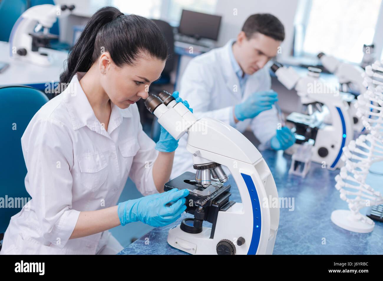 Sehr aufmerksame Mikroskop untersuchen Wissenschaftler Stockbild