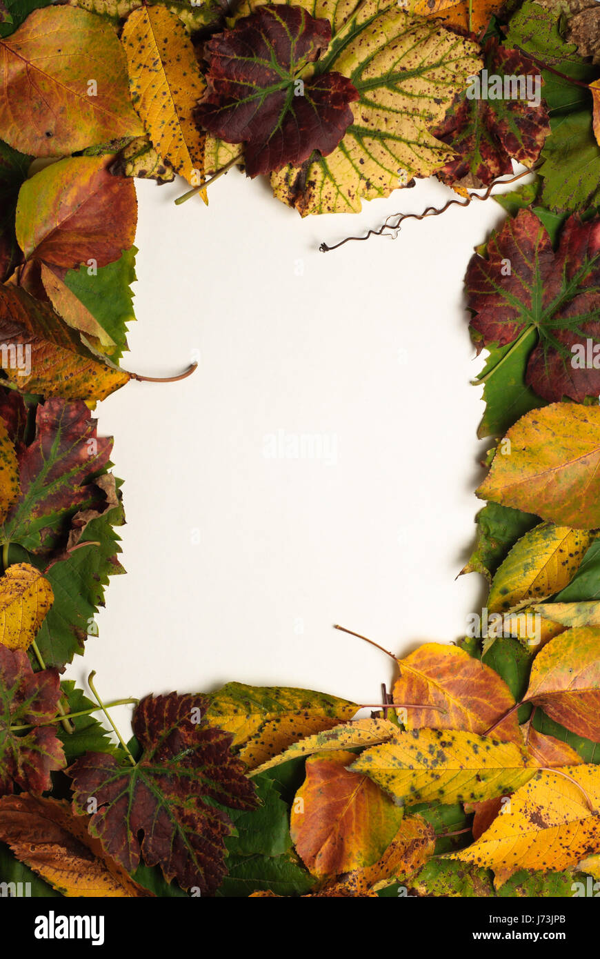 Data Leaf Stockfotos & Data Leaf Bilder - Alamy