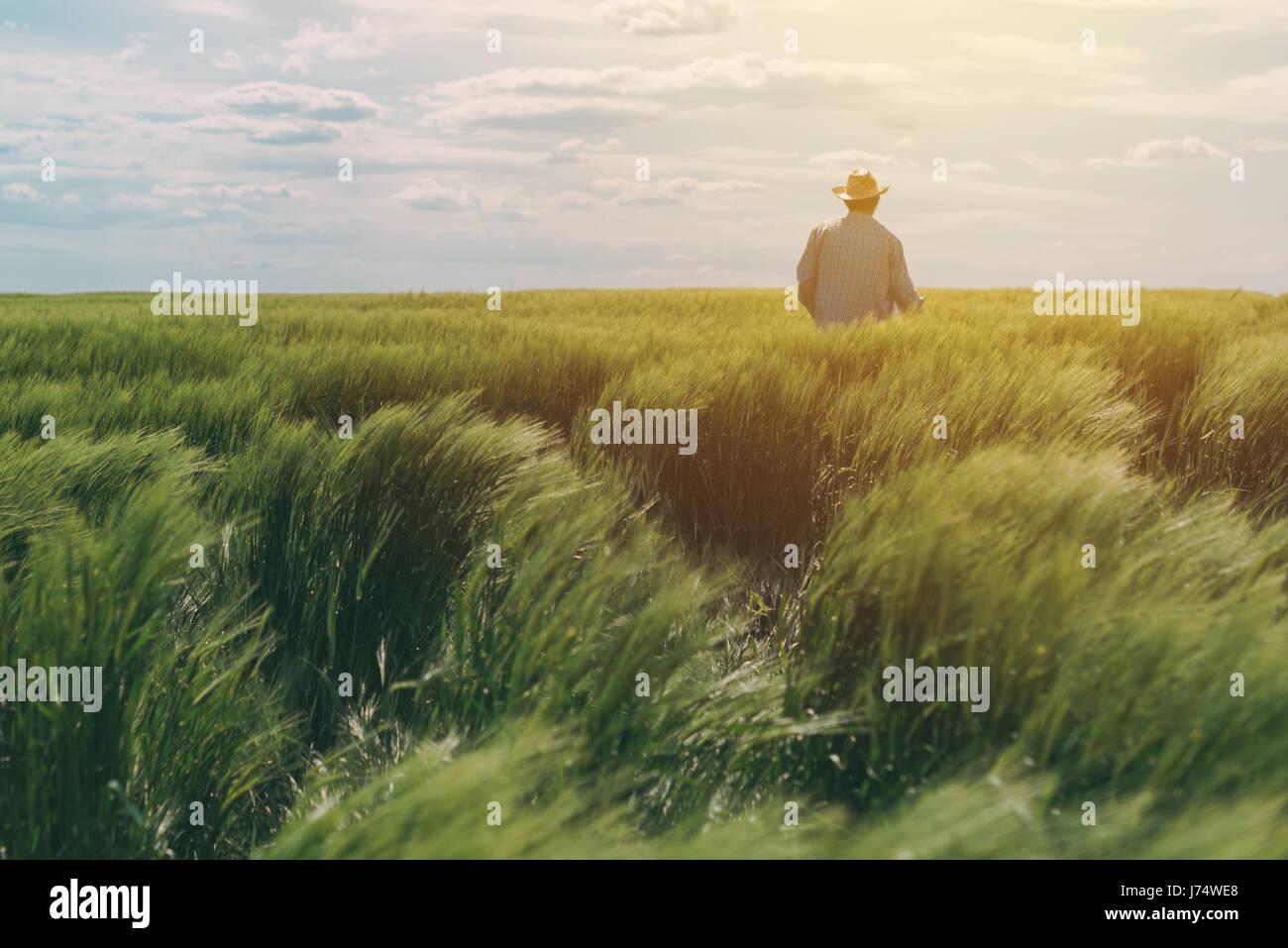 Landwirt zu Fuß durch ein grünes Weizenfeld an windigen Frühlingstag und Getreide zu prüfen Stockfoto