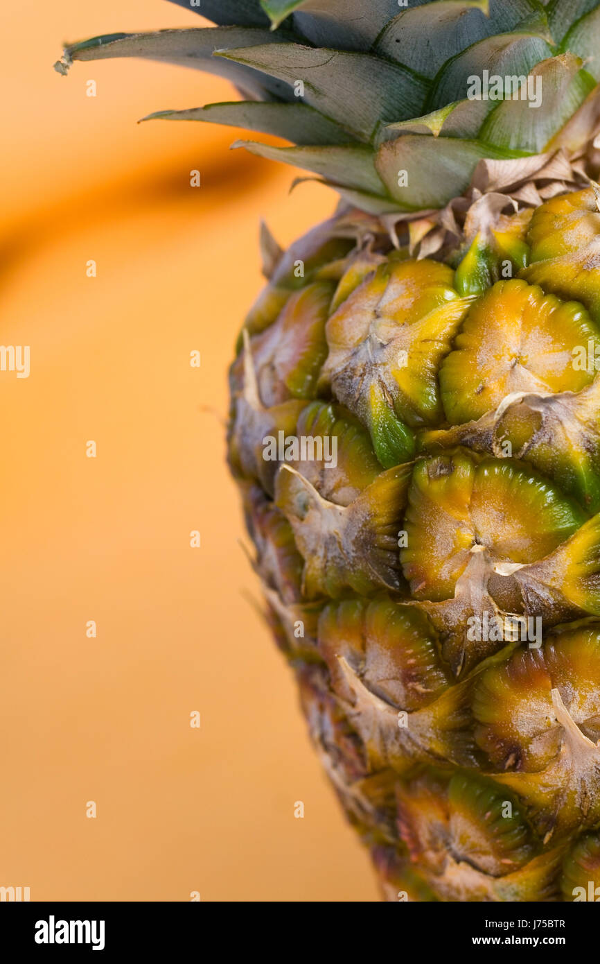 Fantastisch Ananas Malvorlagen Ideen - Malvorlagen Von Tieren ...