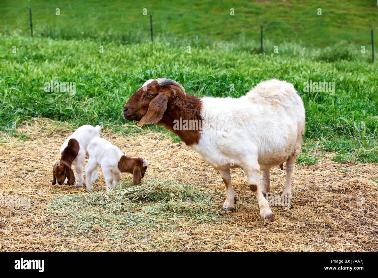 Motherhood Stockfotos & Motherhood Bilder - Alamy