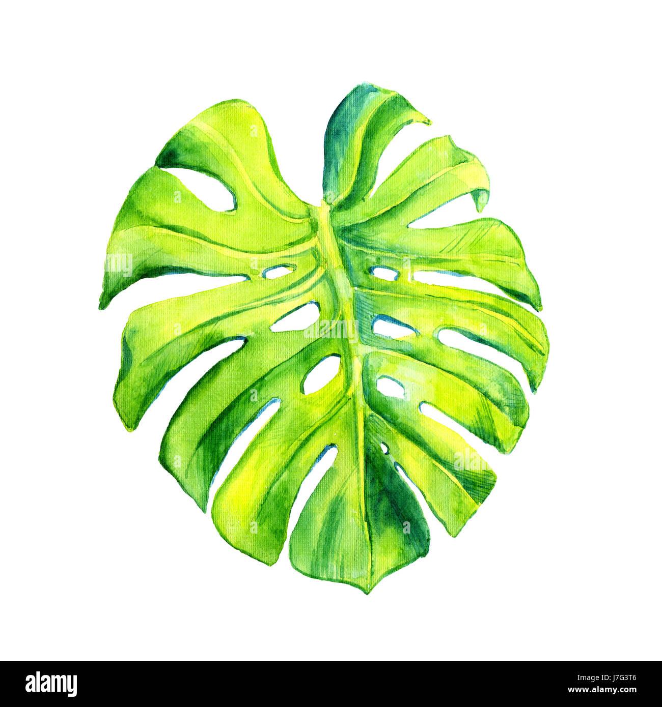 ein blatt einer tropischen pflanze monstera philodendron nachberufliche pflanze liane. Black Bedroom Furniture Sets. Home Design Ideas