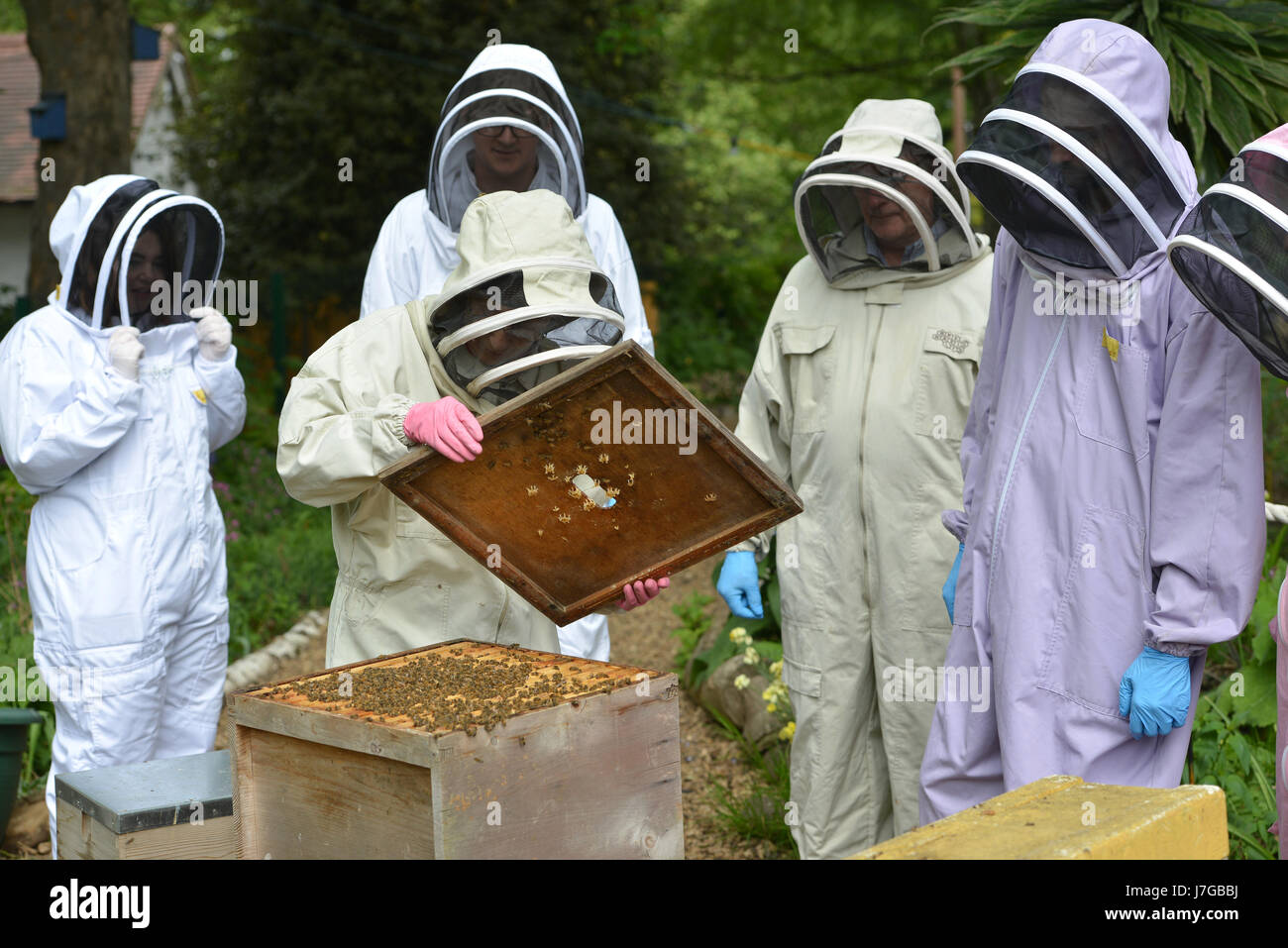 Bienenzucht von Urban Bee im Londoner Kennington Park. Stockfoto