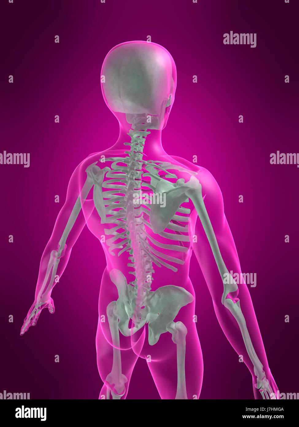 Berühmt Anatomie Des Menschen Für Dummies Bilder - Menschliche ...