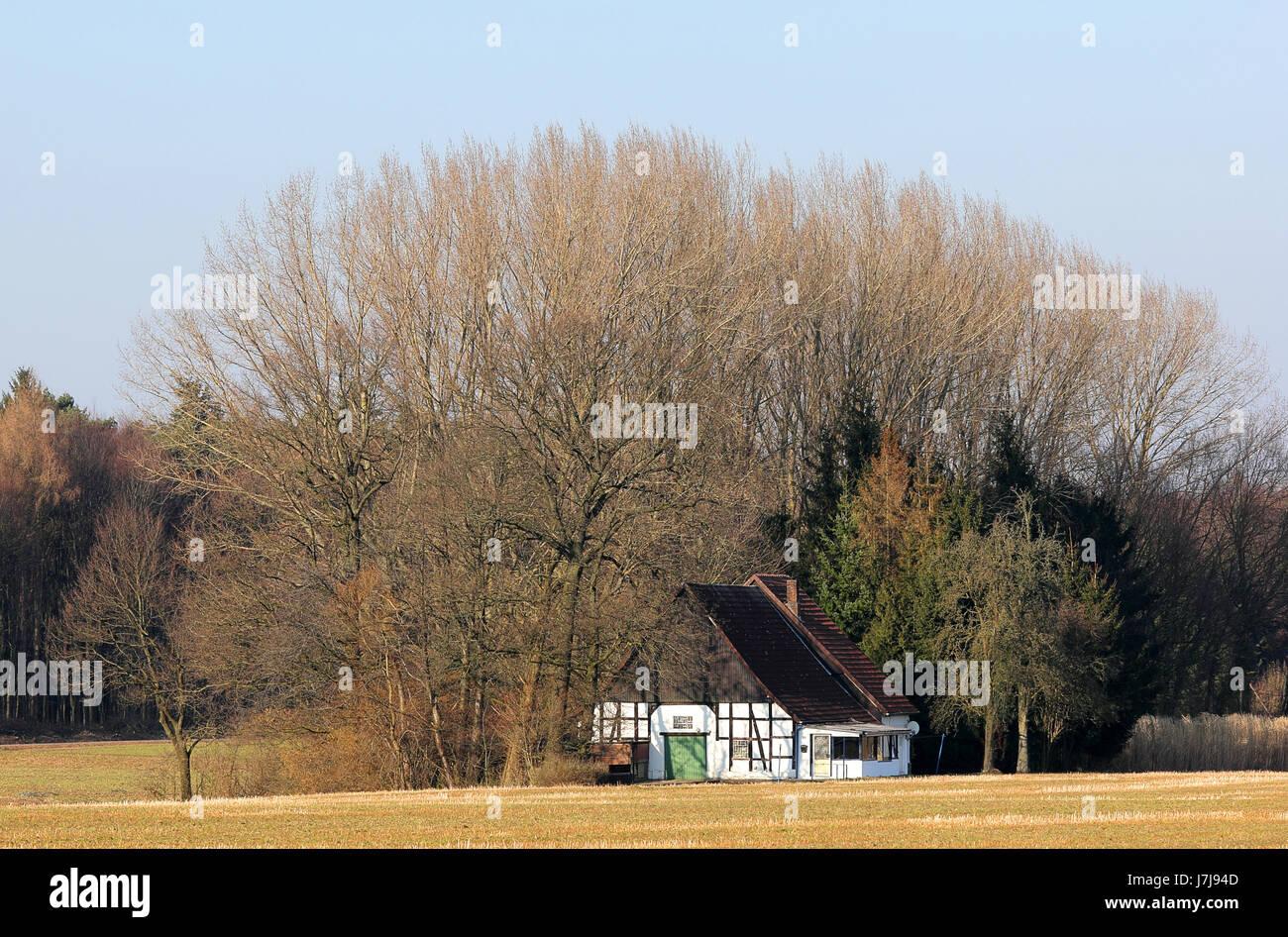 Baum Strahl Feld Büschel von Bäumen Rahmenarbeit Stoppeln ...