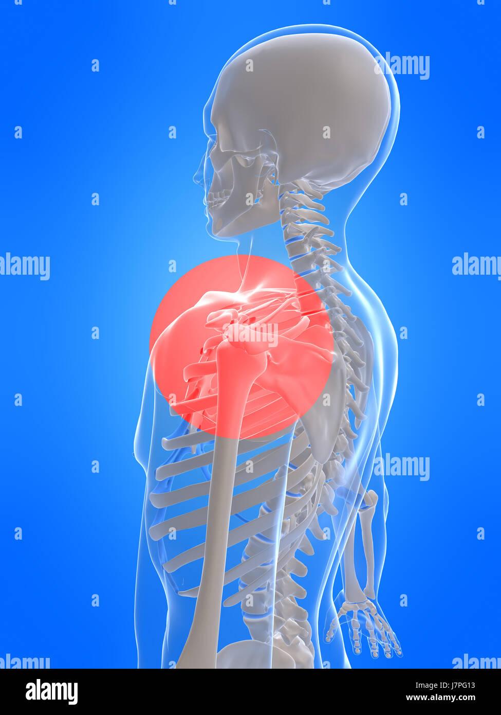 Spinal Xray Stockfotos & Spinal Xray Bilder - Seite 4 - Alamy