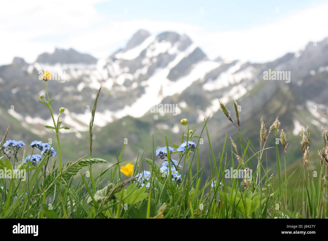 Berge Wiese Berg Berge Alpen Alp der Schweiz Anblick Ansicht outlook Stockbild