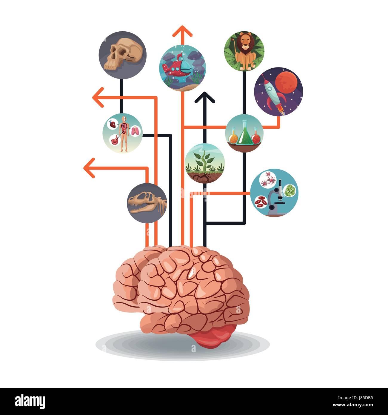 Ziemlich Das Gehirn Markierte Diagramm Galerie - Menschliche ...