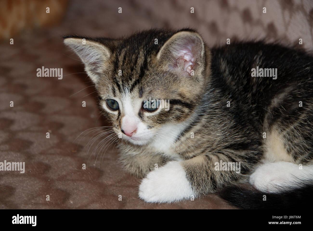 tierische junge tiere katze baby k tzchen pussycat katze. Black Bedroom Furniture Sets. Home Design Ideas