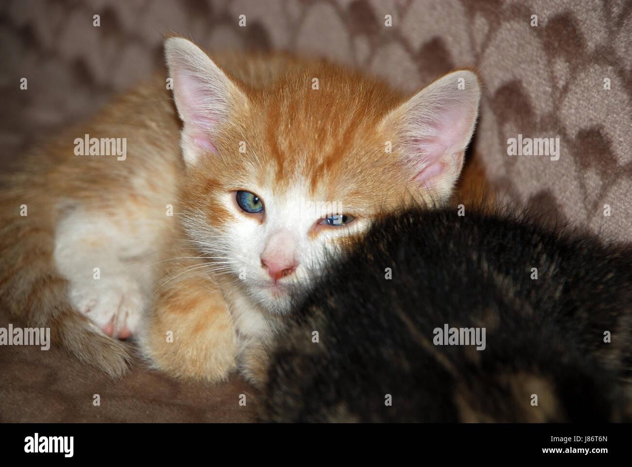 Ausmalbilder Von Süßen Katzen : Fein S E Malvorlagen F R Hunde Und Katzen Ideen Malvorlagen Von
