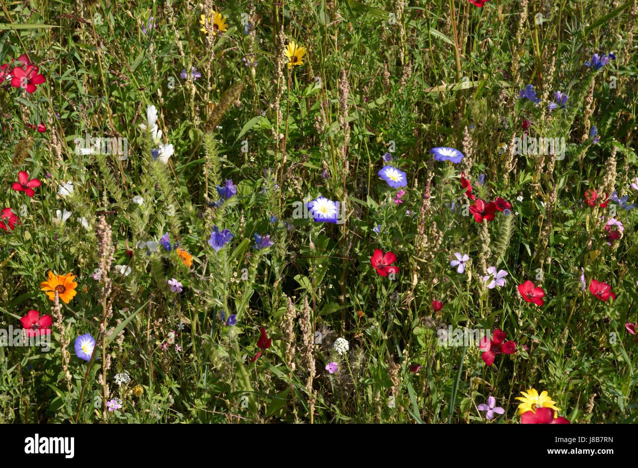 farbige, bunte, wunderschöne, vielfältige, farbenprächtige, Blume, Blumen, Stockfoto