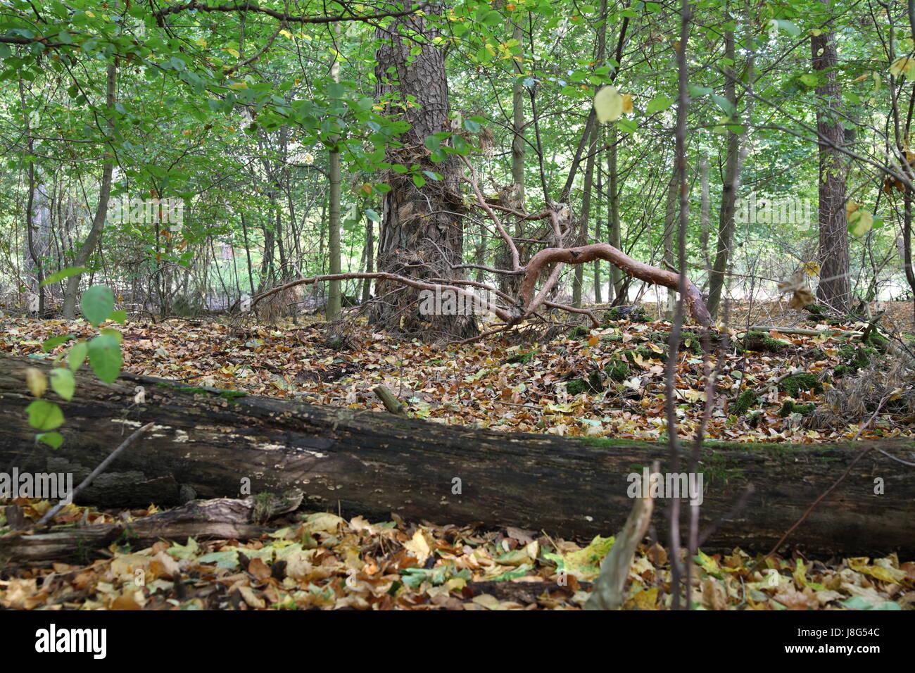 Atemberaubend Herbst Baum Färbung Blatt Bilder - Malvorlagen Von ...
