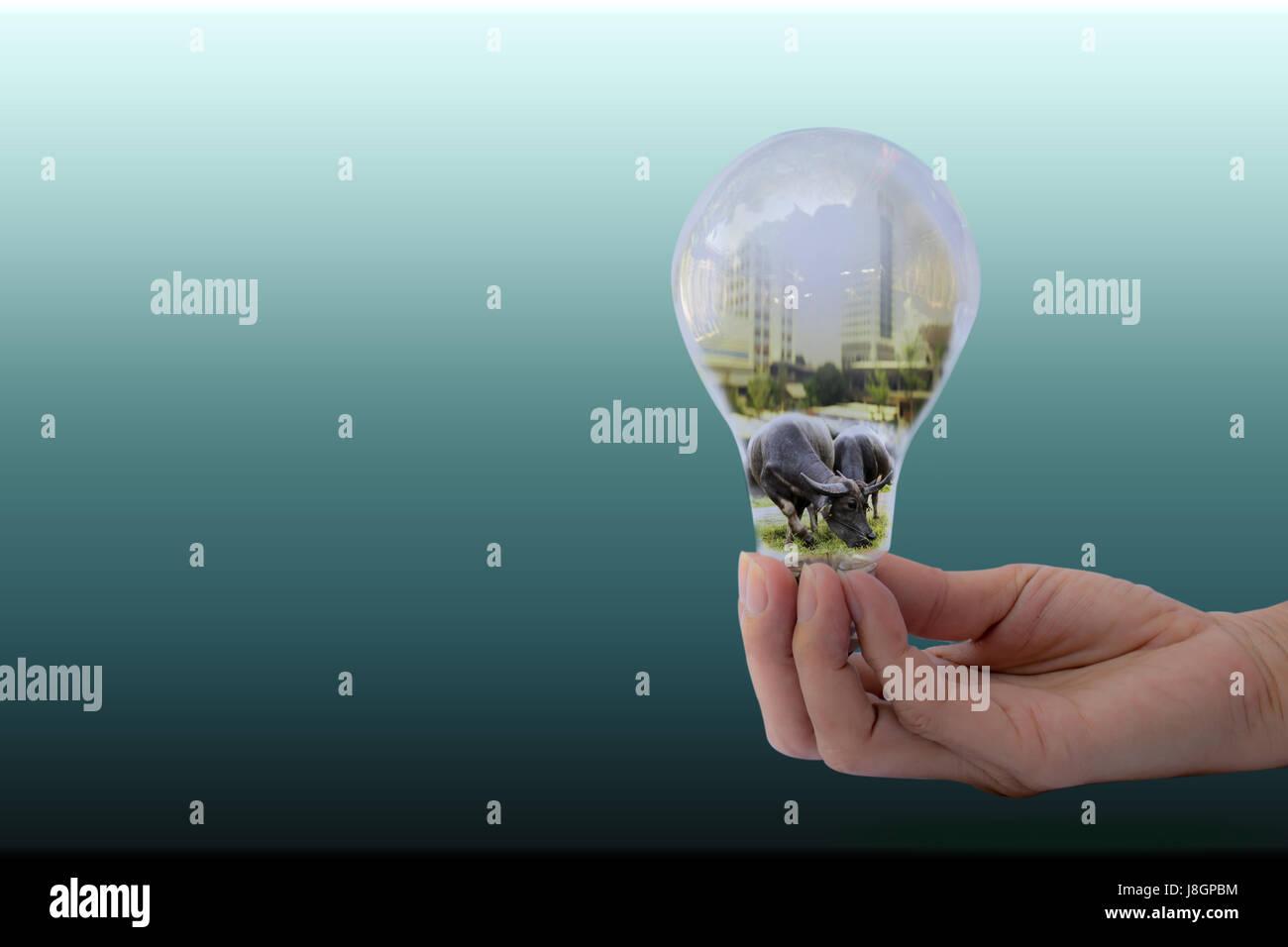 Hand der Person, die Glühbirne für Idee und Büffel in Birne Stockfoto