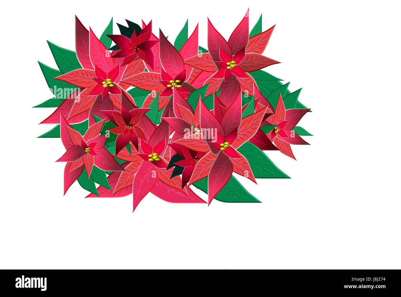 Advent, Weihnachtsstern, Weihnachten, Xmas, x-mas, blau, isoliert ...