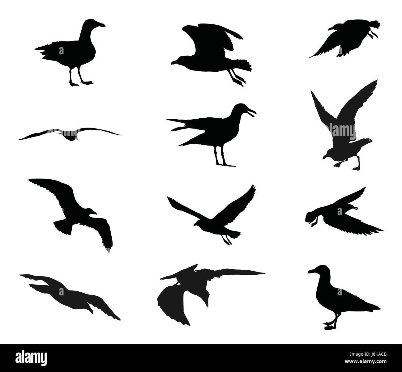 fliegende möwe malvorlage  best ausmabilder 2020