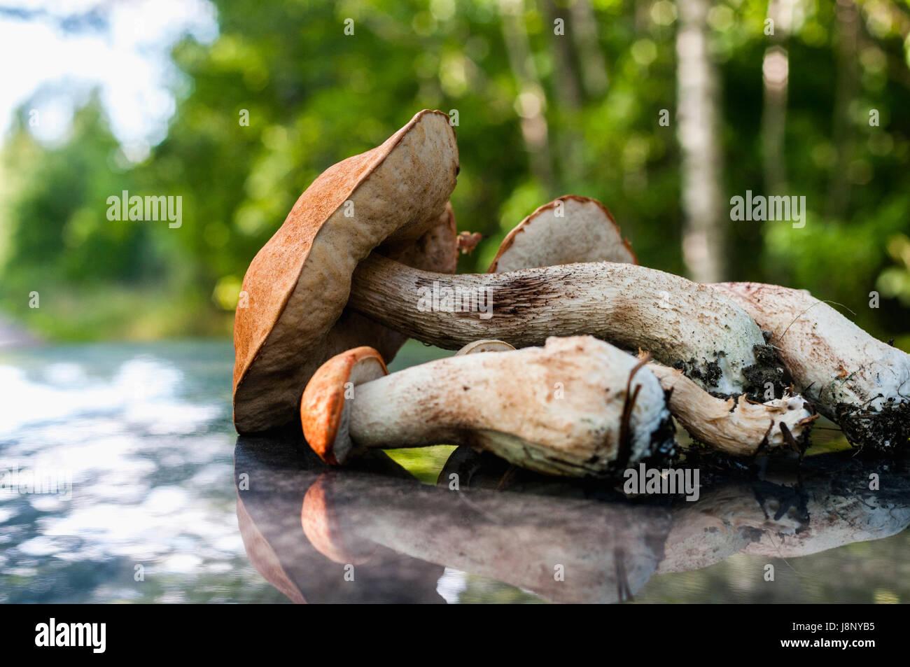 Nahaufnahme von Pilzen Stockfoto