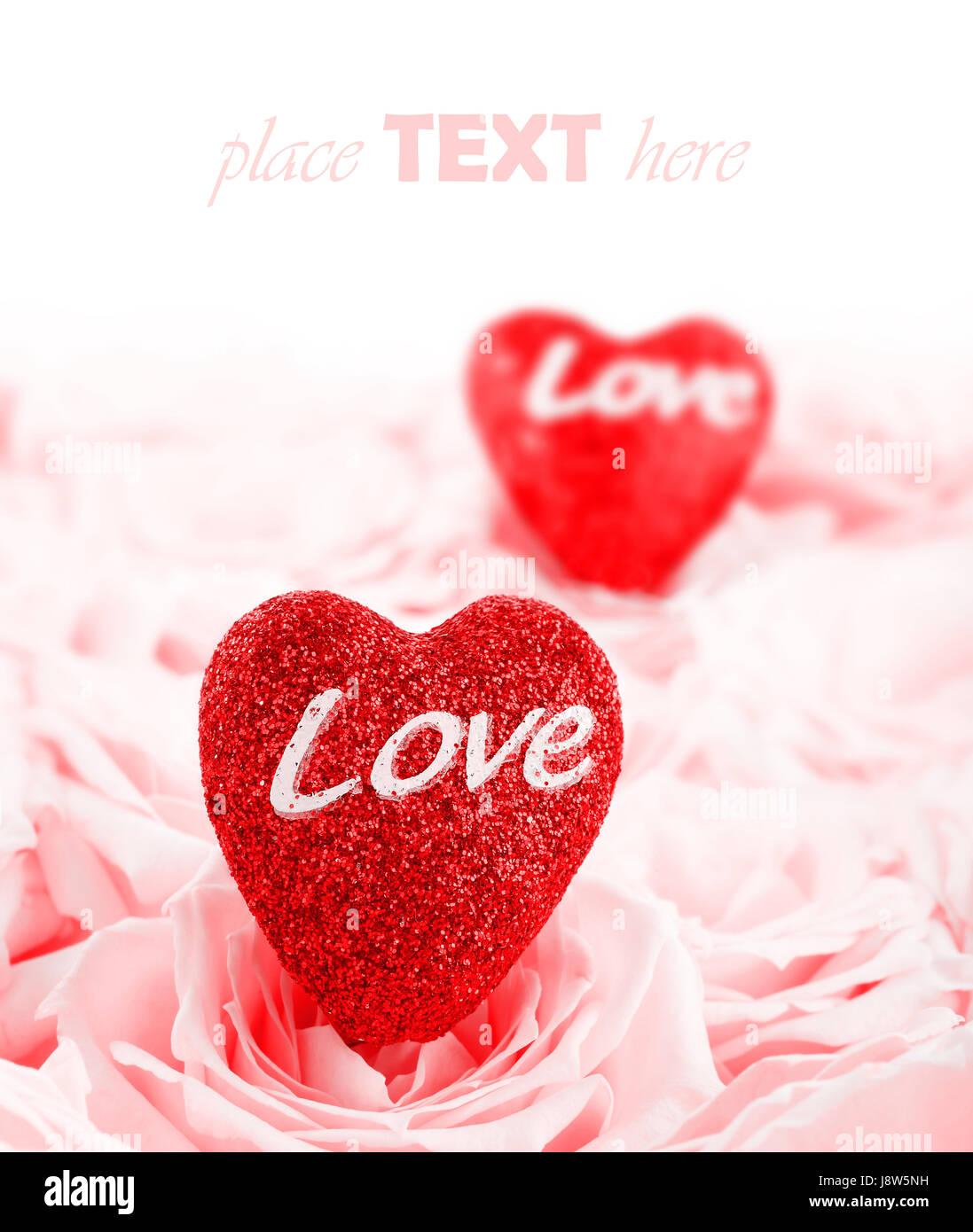Blume Pflanze Rose Liebe Verliebt Verliebte Sich In Liebe
