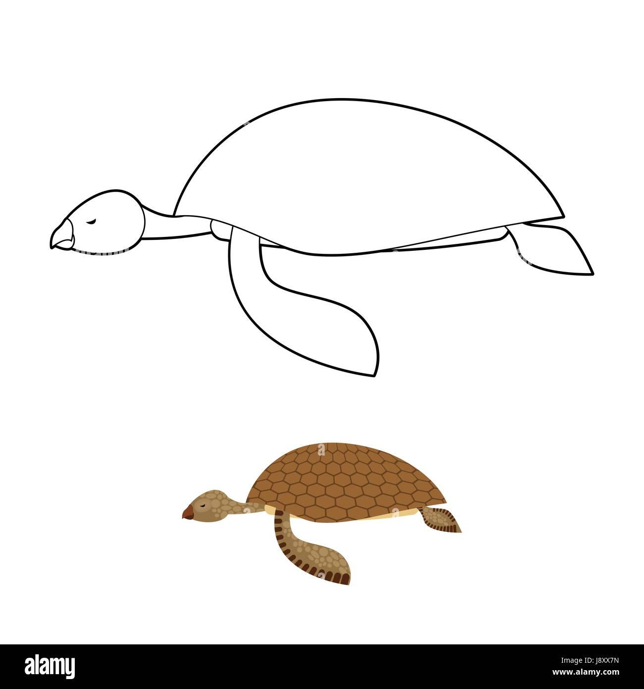 Niedlich Schildkröte Malbuch Bilder - Malvorlagen Von Tieren - ngadi ...