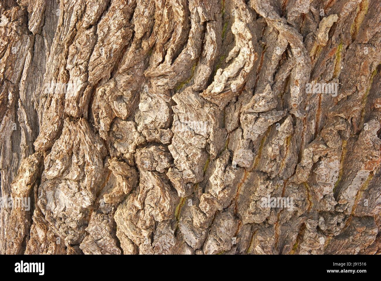 Holzstamm holzstamm birke deko durchmesser ca cm ca cm hoch with holzstamm gallery of lampen - Baumstamm deko saule ...