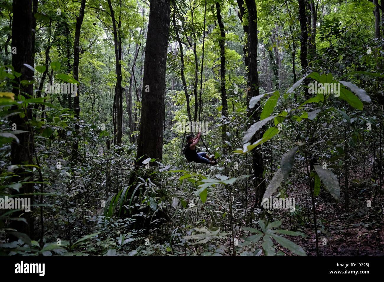 Mahagonibäume  Ein Filipino Mann schwingt auf einem Seil am Bohol Wald ein ...